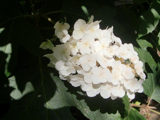 CIMG9462